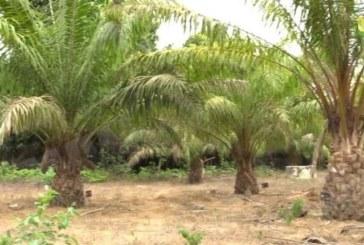 ZIGUINCHOR : MARY TEUW NIANE Bâtit Le Développement Autour De La Palmeraie