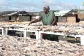 ZIGUINCHOR: Le calvaire des transformateurs de Boudody