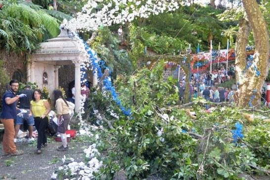 PORTUGAL: La chute d'un arbre en pleine fête religieuse tue 13 personnes