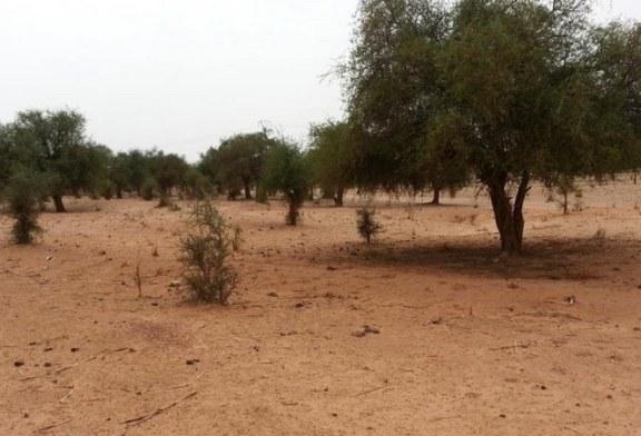 NIGER: des soldats nigériens et américains tués à la frontière du Mali