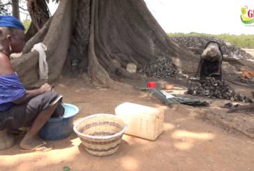 ZIGUINCHOR : Le business des huîtres : l'occupation quotidienne des femmes à Thiobon