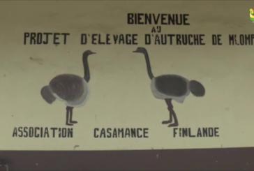 BIGNONA : la ferme d'Autruches de Mlomp en Difficulté malgré l'appui de la DER