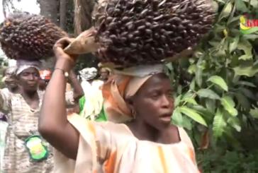 BIGNONA: Quand l'expérience des femmes de Thionck Essyl en matière de palmeraies attire les planteurs de Kolda