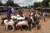 ZIGUINCHOR: Un déficit inquiétant de moutons est noté à une semaine de la Tabaski