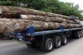BIGNONA: La brigade des eaux forêts de Sindian a saisi deux camions gambiens chargés de bois