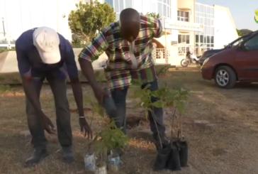 ENVIRONNEMENT : Le mouvement 'Banco Djico' veut faire de la ville de Ziguinchor, un espace vert