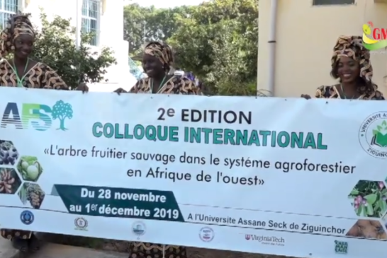 COLLOQUE SUR LES ARBRES FRUITIERS, Le recteur Kourfia Diawara salue la portée de l'initiative